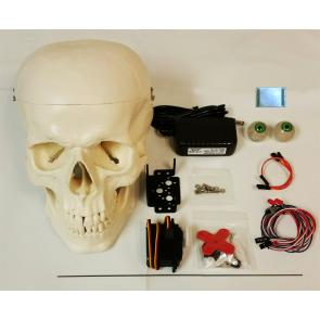 Wee Little Talker Skull Kit Brain Boost